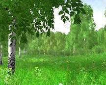 День дерева