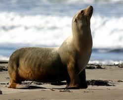 Морское млекопитающее
